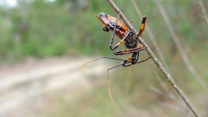 25 самых удивительных пауков планеты