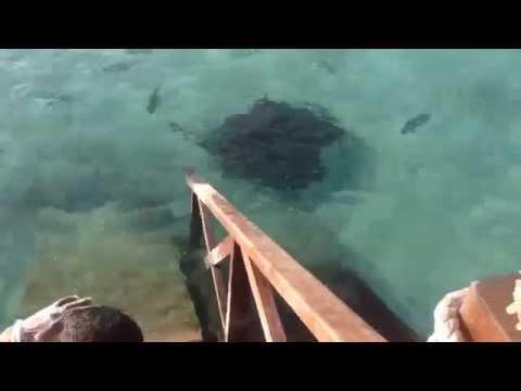 Парень кормил рыб  и тут к нему подплыл скат