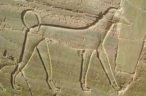 Археологи нашли под Самарой свидетельства ритуалов с поеданием собак