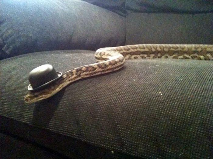 20 очаровательных змей в шляпках