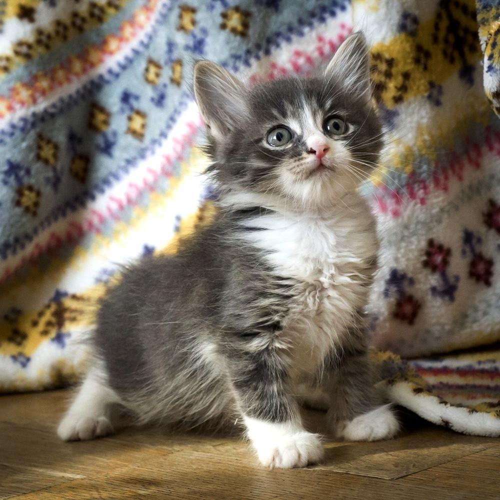Пятничный котик Шуршик – комочек уюта и тепла!