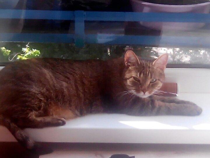 С тех пор как Муси не стало… Семья скучала по любимой кошке, пока кое-кого не встретила!