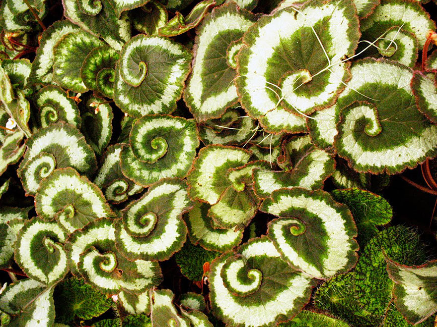 Perfect-Geometric-Patterns-In-Nature10__880