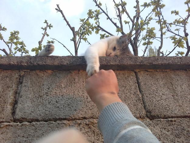 14. Расслабленный дружелюбный котёнок. животные, котята, милота
