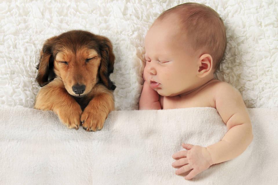 Viewing baby animals activates the same neural reward circuitry as looking at human babies.