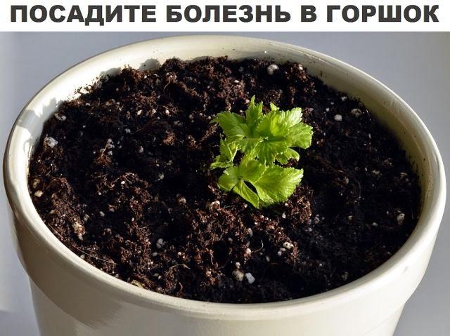 Посадите болезнь в горшок
