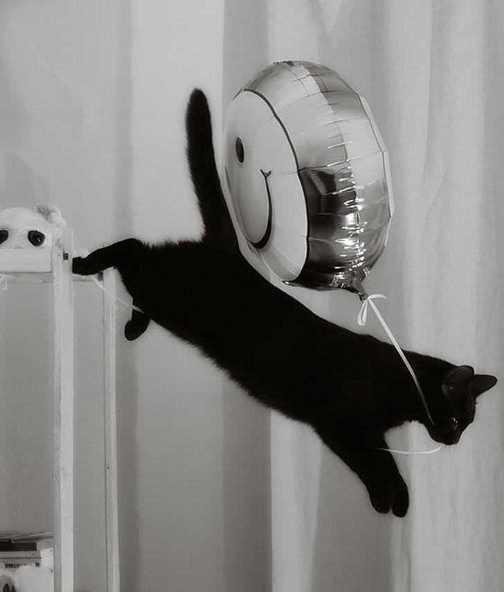 CatThieves09 Котики, которых застали врасплох