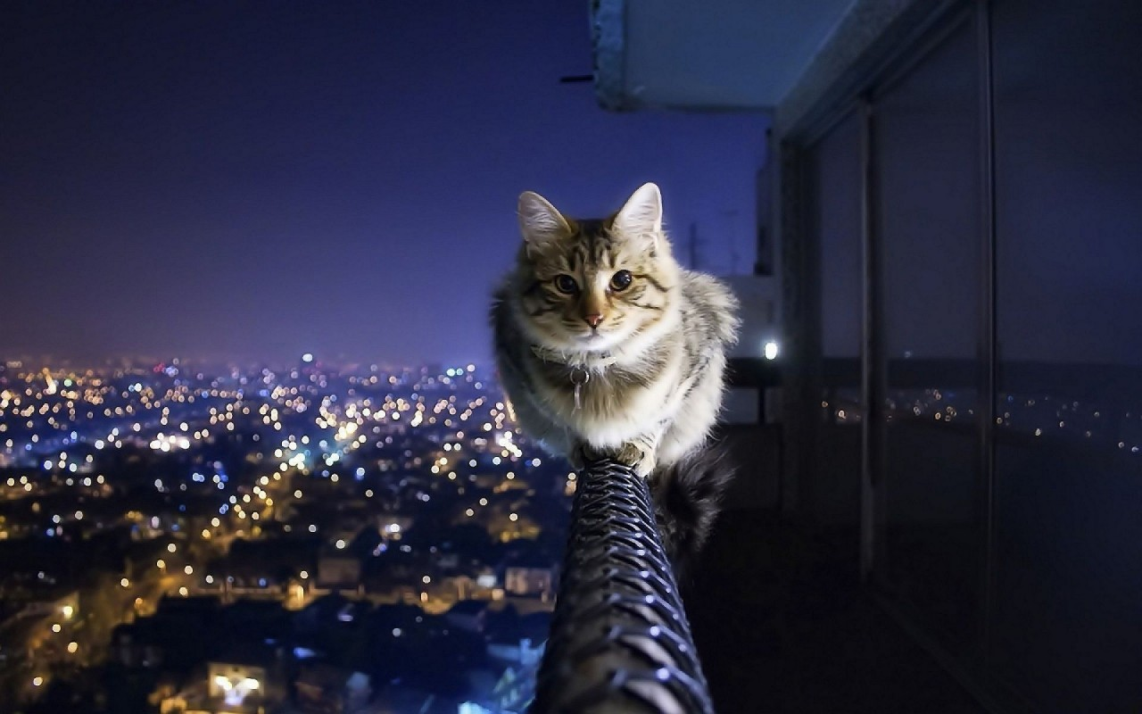 Котик как явление в личной жизни