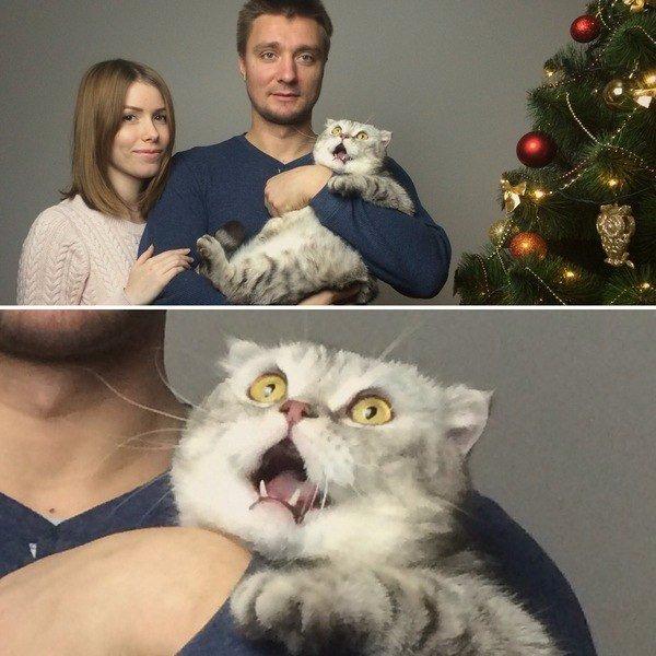 Просто хотели сделать новогоднюю открытку...