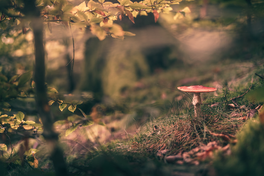 Mushroom during Autumn Fall in the Forrest by HatCat Photography on 500px.com