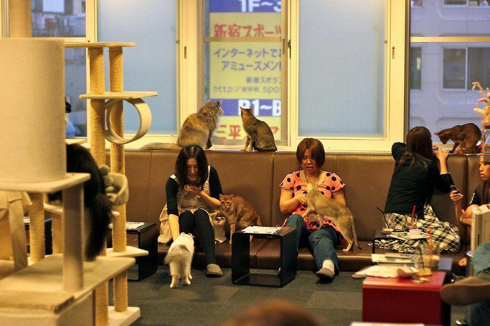 catcafe09 Самые необычные «кошачьи» кафе из разных стран мира