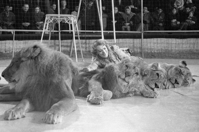 Ковер из львов, 1964 год | Фото: ria.ru