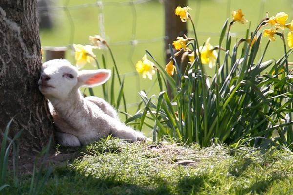 Знаки весны: весенние фотографии со всех уголков мира