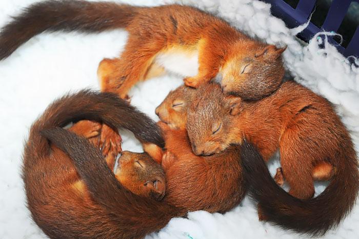 ������ ������ �������� � ������ ������ ����� �������� Sanctuary Wildlife Care � �������, �������������.