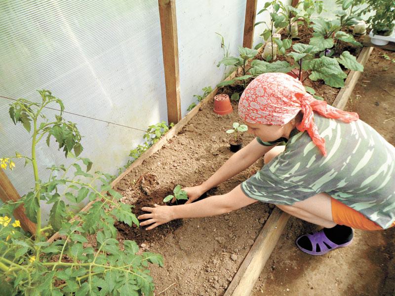 Как обеспечить богатый урожай
