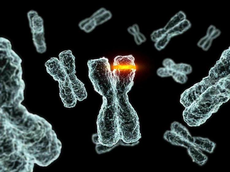 Как редактирование генома может спасти или погубить человечество