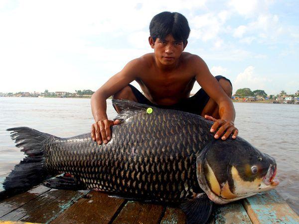 самая большая рыба которую поймали рыбаки