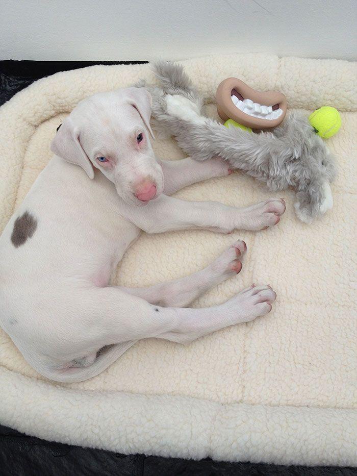 Вырос на глазах: покадровая съёмка жизни спасённого щенка, который может ослепнуть и оглохнуть в любое время
