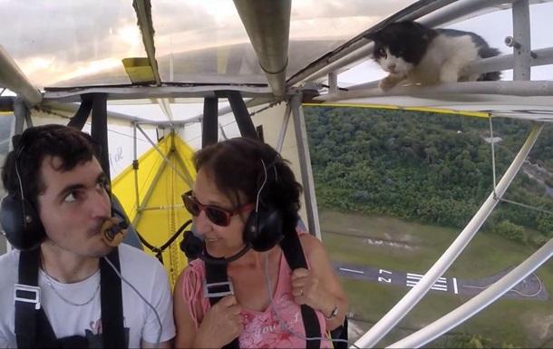 Ролик о летящем на крыле самолета коте набирает популярность в Сети