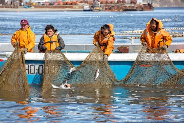 Росрыболовство отчиталось опадении цен накрасную рыбу иикру