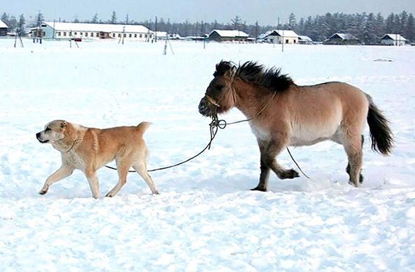 Пес «уговорил» вредную лошадь ходить на водопой в лютый мороз