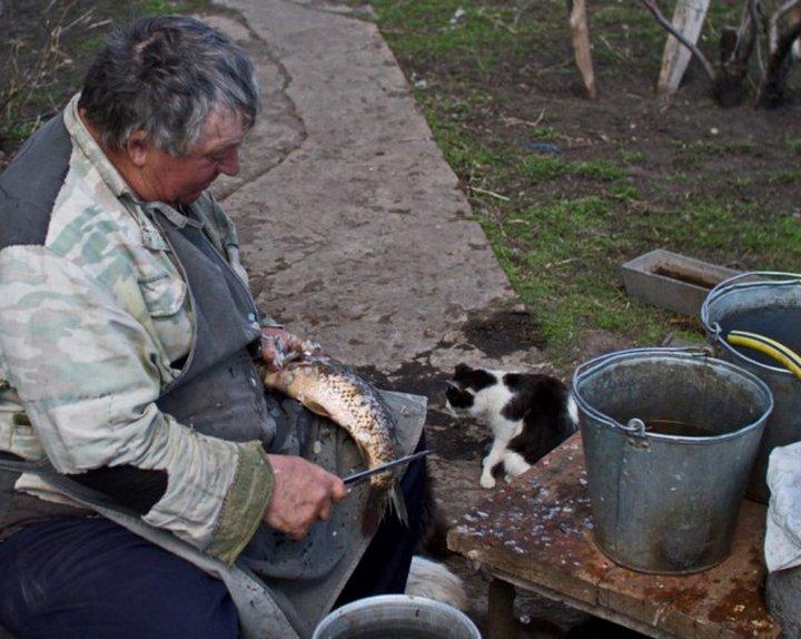 Кошачья операция «Рыба»