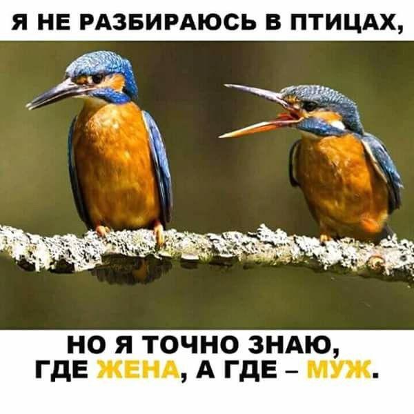 http://mtdata.ru/u24/photoA553/20537088397-0/original.jpg