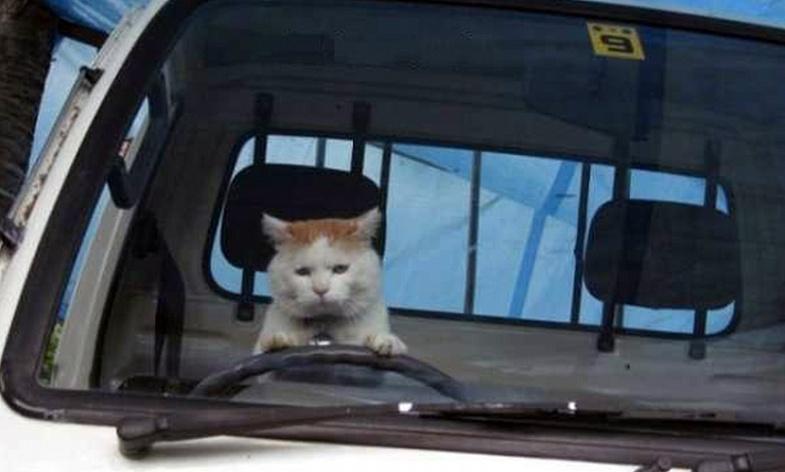 Грустного кота заметили за рулем в Екатеринбурге