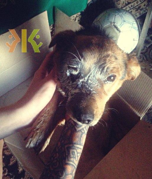 Девушки-подростки взорвали щенка петардой в Кропоткине
