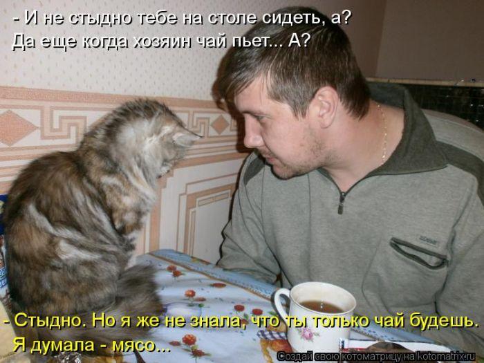 Без кота жизнь не та (36 фото)