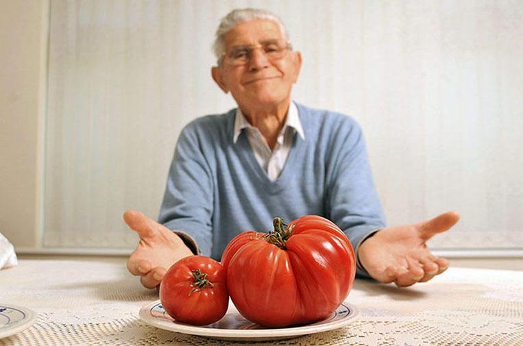 Как вырастить помидоры-гиганты