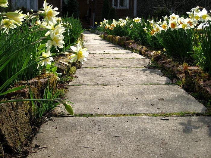 Садовые дорожки своими руками бетонная дорожка на даче