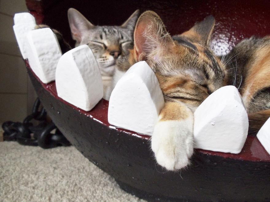 Оригинальная кровать для кота