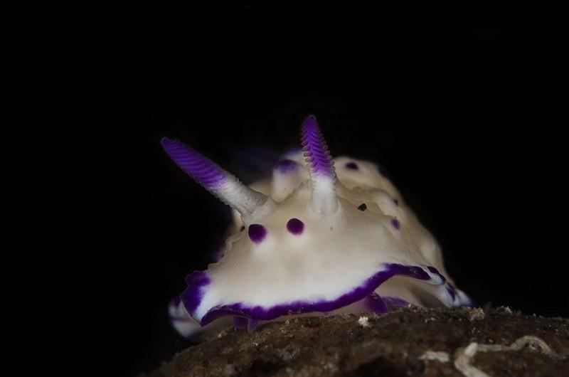Фантастическая красота моллюсков