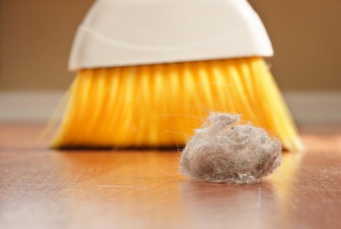 Эффективные способы избавления от пылевых клещей.