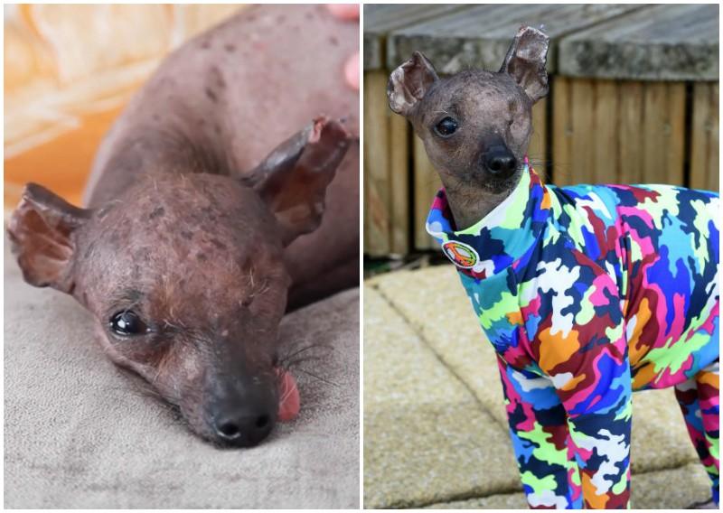 Хрупкая собачка пережила рак кожи, но не сдалась недугу