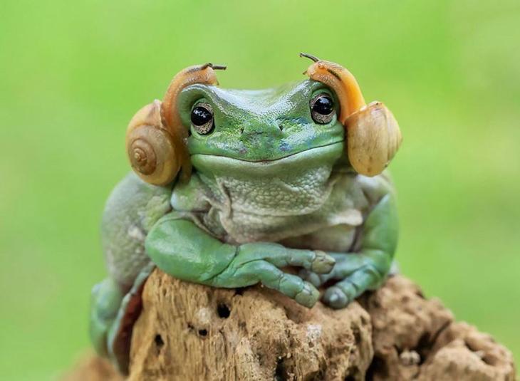 Царевна-лягушка: фантастические снимки индонезийского фотографа