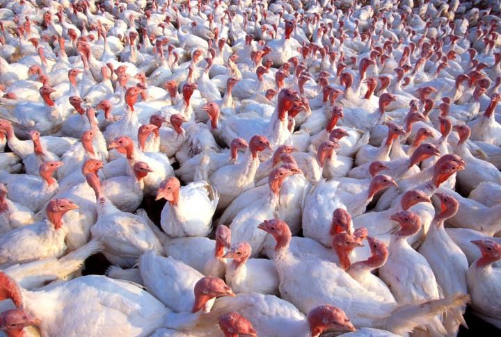Импортозамещение побеждает: Россия начинает экспортировать мясо в ЕС