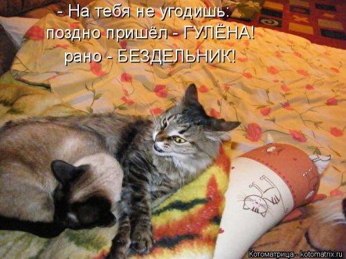 Свежая котоматрица на Уморе …