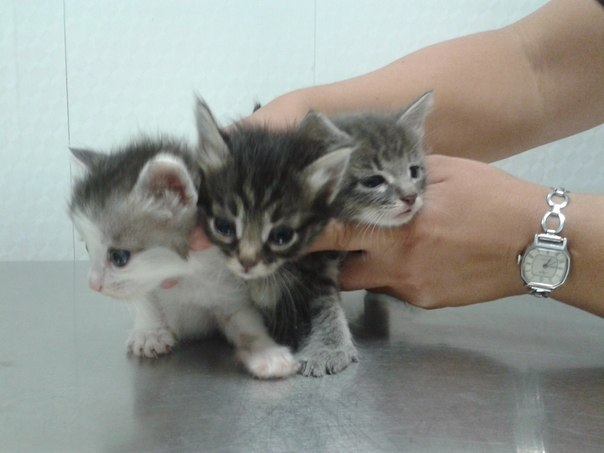 Холодным сентябрьским днём в сильный ливень я нашла коробку с тремя холодными и голодными котятами