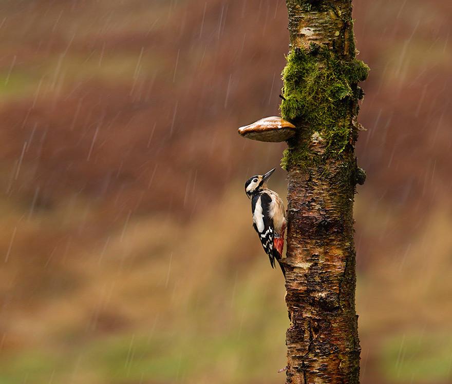 Древесный гриб тоже пригодился животные, зонтик