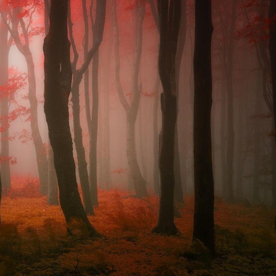 5 минут чудесной прогулки по сказочному лесу с Михалычем