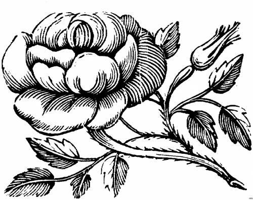 Чёрно-белые фото для распечатки цветы в