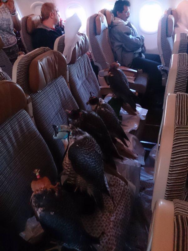 Необычный пассажир в самолете пассажир, самолет