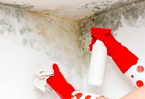 Как легко убрать запаха плесени на одежде и устранить причины?