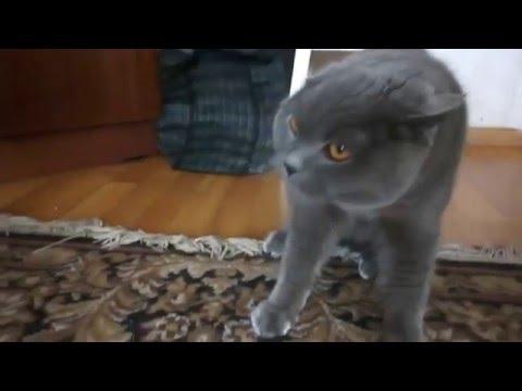 Это как надо достать кота, чтобы он так ругался?