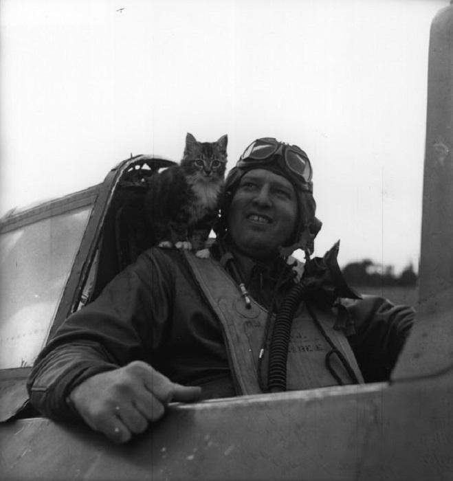 Пушистый талисман пилота Королевских ВВС.