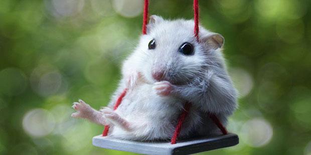 18 крутых животных, которые поднимут вам настроение, хотите вы этого или нет