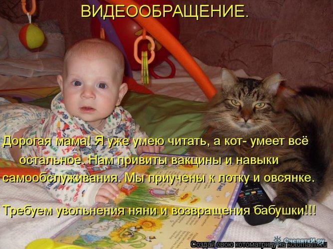 Юморная котоматрица 30