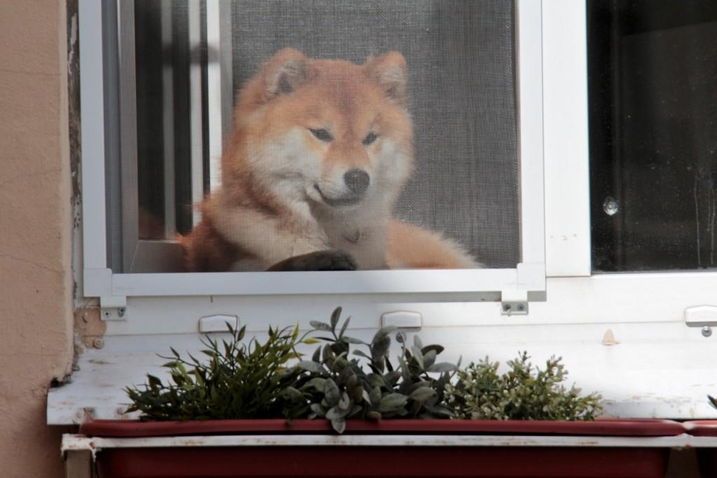 Соседка ...